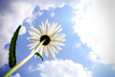 A hopeful image of a flower and a cloudy sky meant to inspire people wondering how to get back on track after relapse